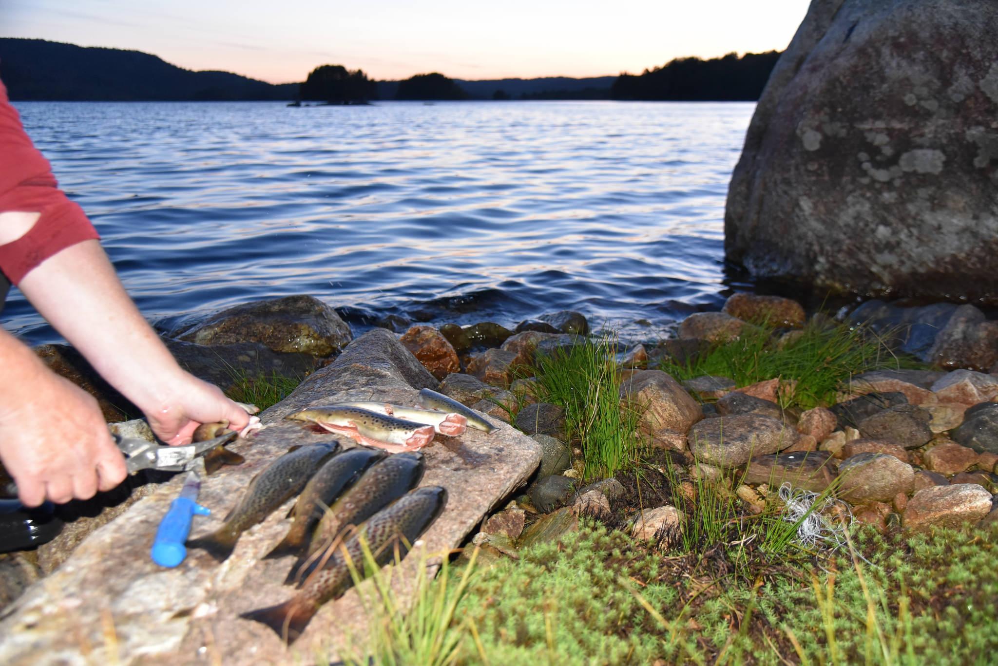 Dra på fisketur i Høvringsvannet og kos deg med frisk norsk ørret.