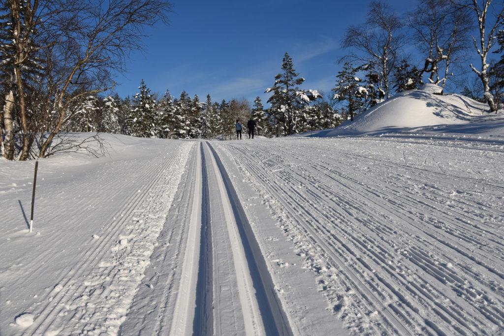Lekre skiløyper på Høgås og Gautestad
